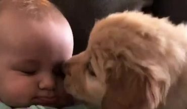 Κουταβάκι δίνει φιλάκια σε μωράκι και το ίντερνετ ΛΙΩΝΕΙ! | ΒΙΝΤΕΟ