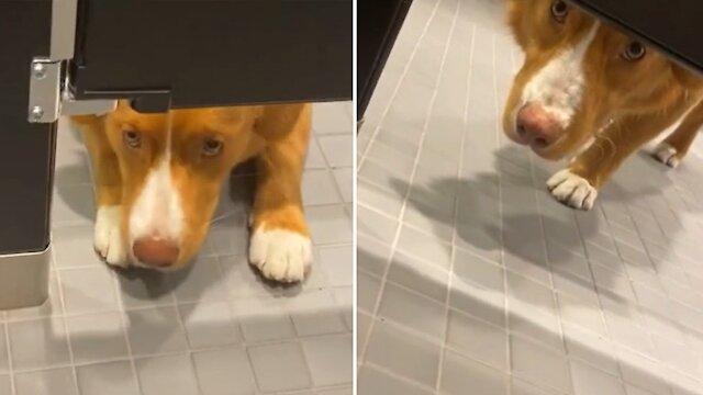 Πονηρίδης σκύλος «παίρνει μάτι» στις αντρικές τουαλέτες! | ΒΙΝΤΕΟ