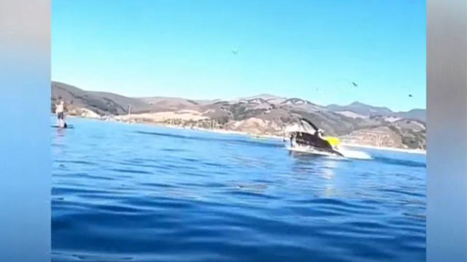 φάλαινα