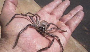 Αν φοβάστε τις αράχνες, ΜΗΝ ΔΕΙΤΕ αυτό το βίντεο! | ΒΙΝΤΕΟ