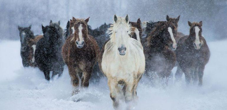 άλογα χιόνια