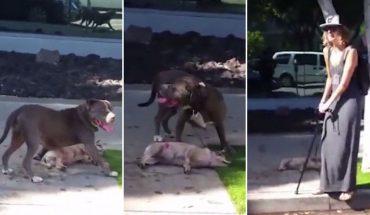Φρίκη: Πιτ-μπουλ ορμάει με φονικές διαθέσεις σε δεμένο σκυλί! | ΒΙΝΤΕΟ