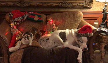 Γατάκια και σκυλάκια ντύνονται Άγιοι Βασίληδες και ρίχνουν το ίντερνετ!   ΒΙΝΤΕΟ