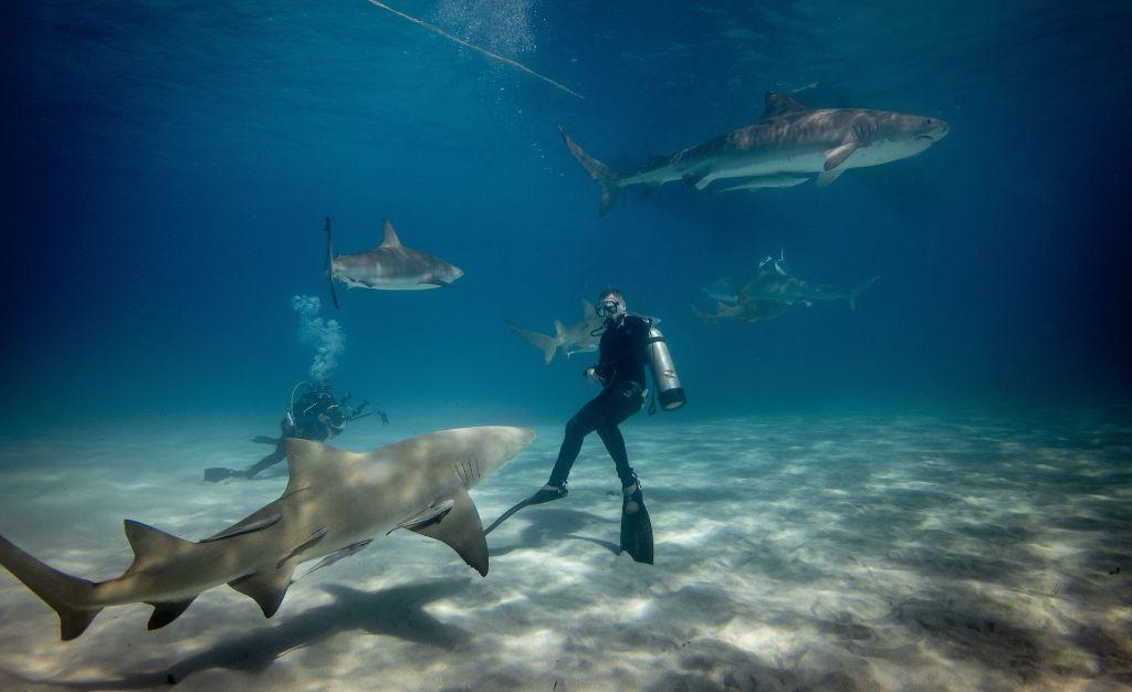 Βούτηξαν για δελφίνια, τους περίμενε ένα... κοπάδι καρχαρίες! | ΒΙΝΤΕΟ