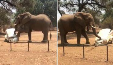 Ελέφαντας τα «παίρνει στο κρανίο» και ΤΣΑΚΙΖΕΙ όχημα! | ΒΙΝΤΕΟ