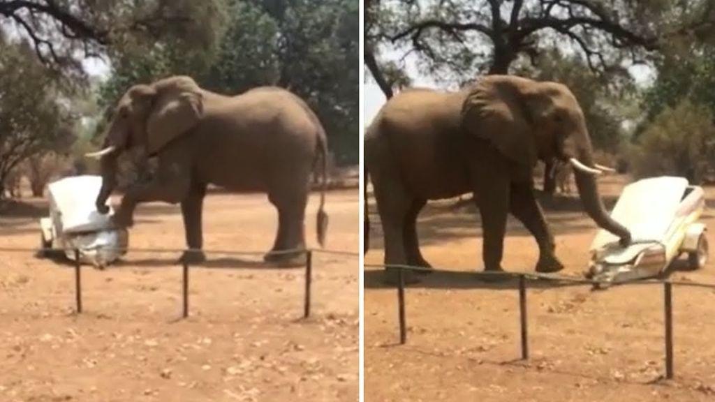 Ελέφαντας τα «παίρνει στο κρανίο» και ΤΣΑΚΙΖΕΙ όχημα!   ΒΙΝΤΕΟ