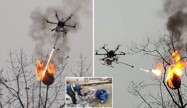 Drone ΤΣΑΚΙΖΕΙ ολόκληρη φωλιά από επικίνδυνες σφήκες!   ΒΙΝΤΕΟ
