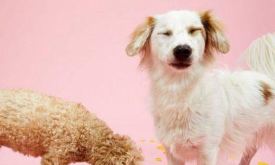 σκυλος αφισα λονδινο