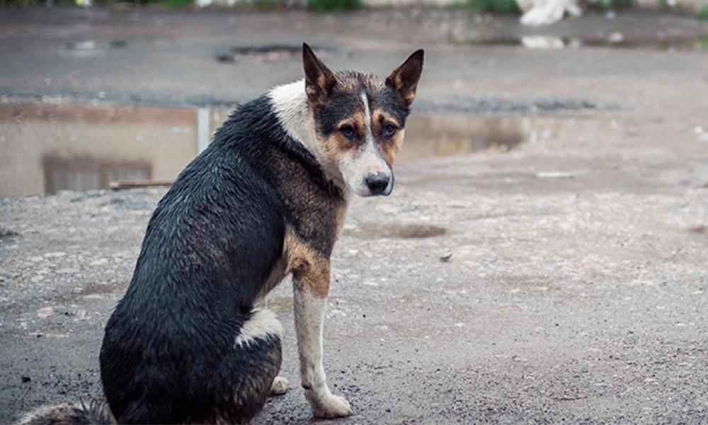 κακοκαιρια σκυλια