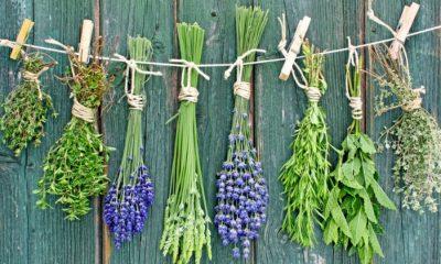 Κρητικά βότανα