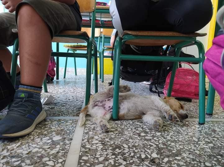 δασκαλα φιλοξενησε σκυλακι στα χανια