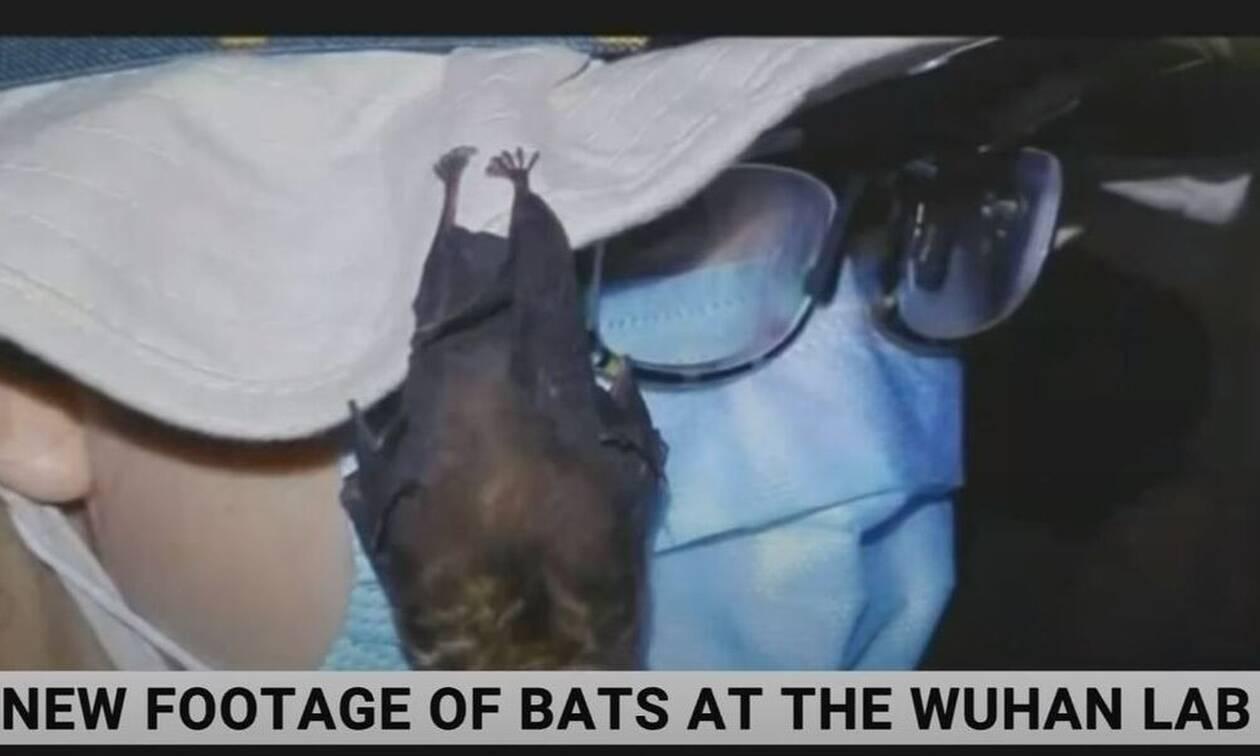 νυχτερίδες γουχάν