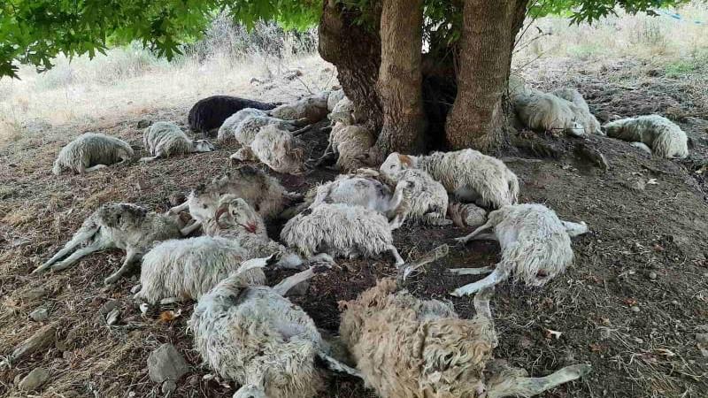 κεραυνός σκότωσε πρόβατα στα Χανιά