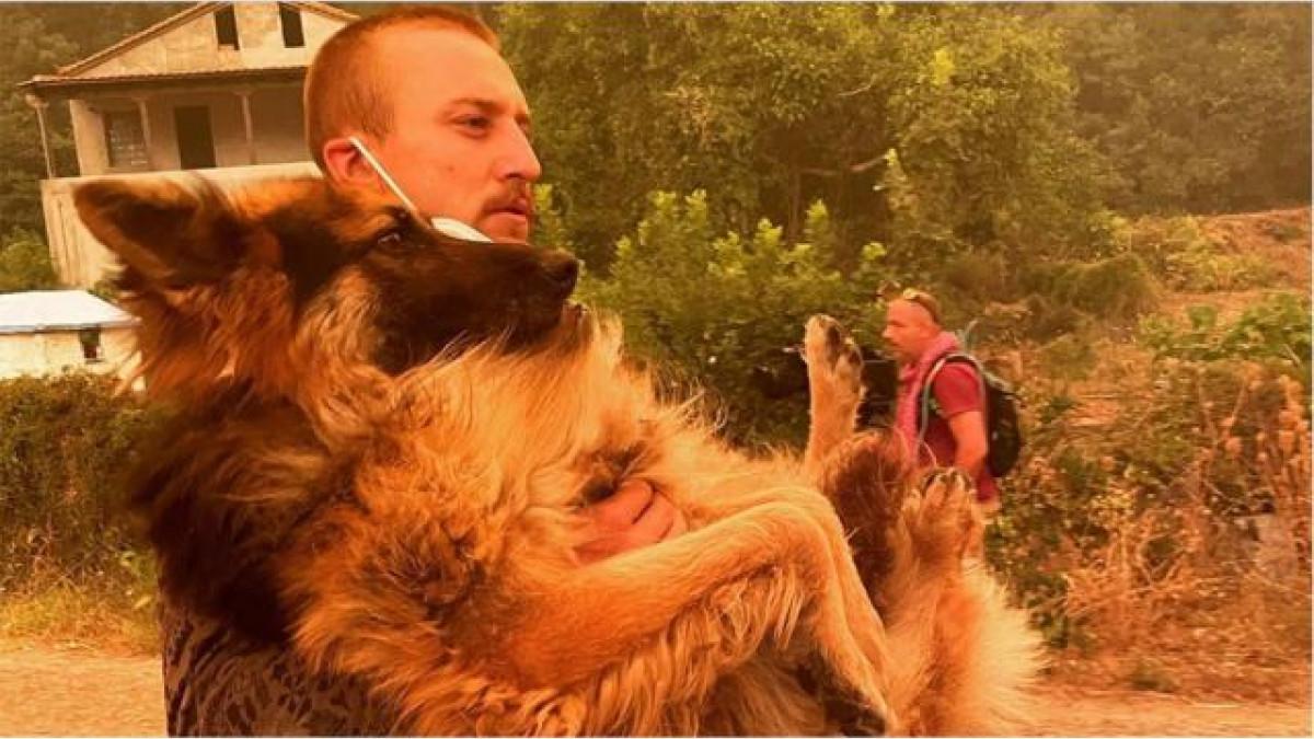 εθελοντής λυκόσκυλο